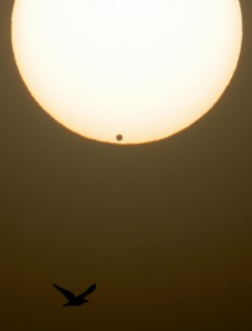 A bird flies during a transit of Venus in La Linea, southern Spain, 08 June 2004.
