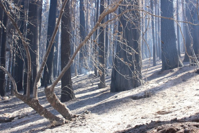 Part of the immense swath of Sierra Nevada forest burned in the Rim Fire that broke out near Yosemite National Park in mid-August. (Mike McMillan/U.S. Forest Service)