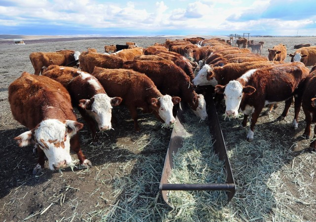 US-ENVIRONMENT-WEATHER-DROUGHT-LIVESTOCK