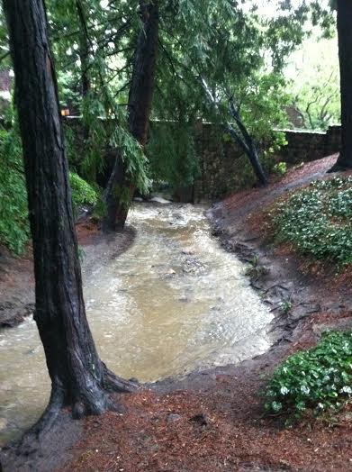 Swollen creek at Live Oak Park on Feb. 9, 2014 (Steven Fruhwirth/Berkeleyside)