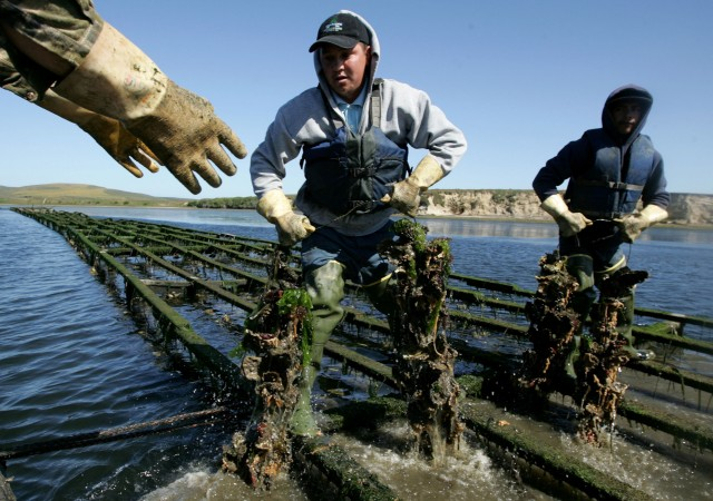 Oyster Fisherman Battles National Park Service Over Harvest Rights