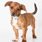 A Pup Named Posey: Rescued Dogs Named for Giants Stars Need Homes