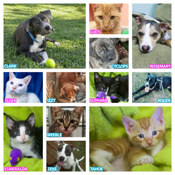 Cats & Dogs Available for Adoption in St Augustine!