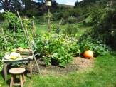 A vegetable garden