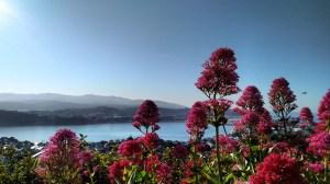 Beautiful Wellington
