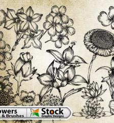 057-hand-drawn-flowers-free-vector-pack-l