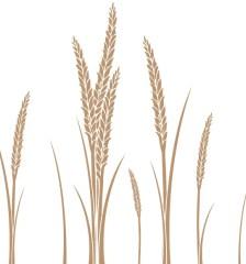 260-ear-of-wheat-vector-art-free