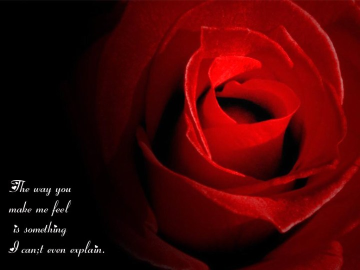 Rose Love Quotes.6 Free Valentines Greeting Cards With Music 2014