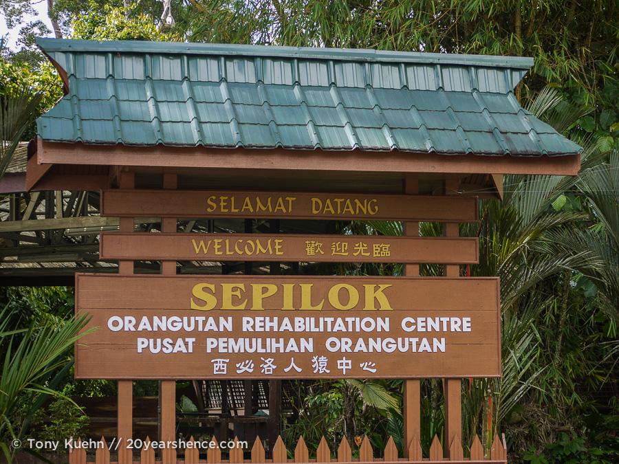 Sepilok Orangutan Rehabilitation Center, Borneo