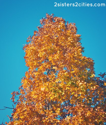 orange and yellow leaves on a tree in fall