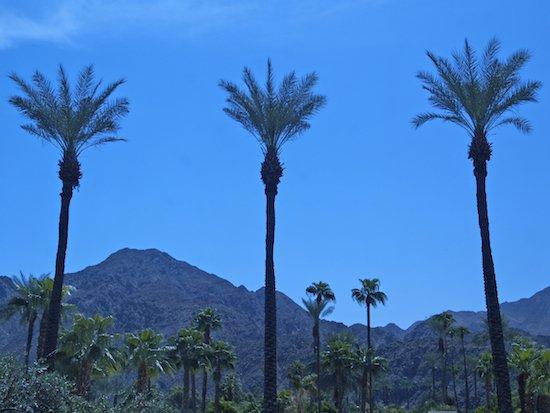 Palm Tree Racecation