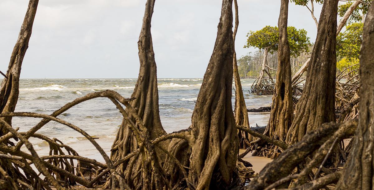 Como planejar uma viagem para Ilha do Marajó