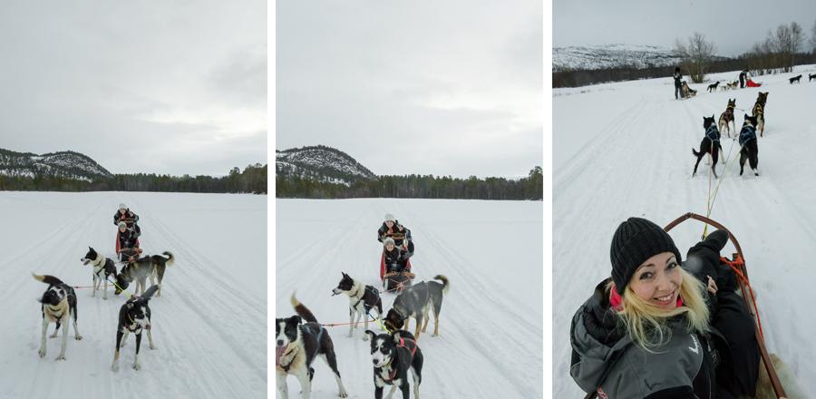 37 frames dogsledding 12