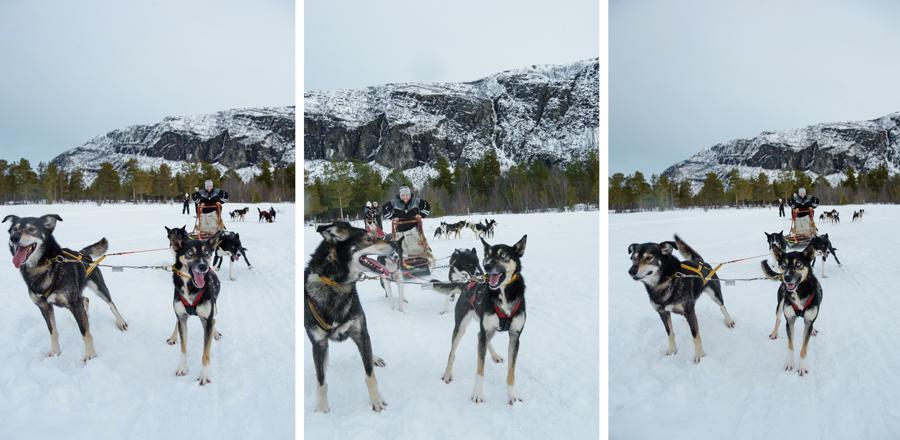37 frames dogsledding 9