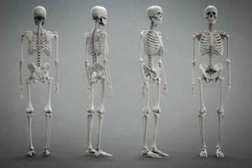 scheletro_3d_model