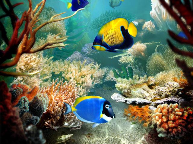 صور اسماك روعة 2016 ، اجمل صور اسماك 2016 ، صور اسماك مميزة fish_screen02.jpg