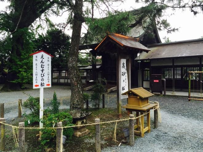 阿蘇神社 | 高砂の松(縁結びの松)