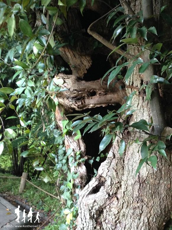 takamatsu-arbre-ritsurinkoen_002