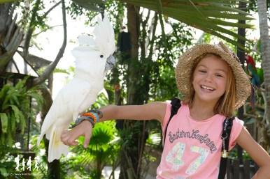 Bali-Bird-Park (76) copie