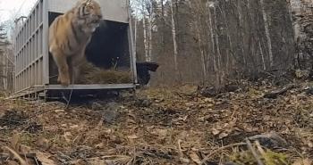 Animals finally free