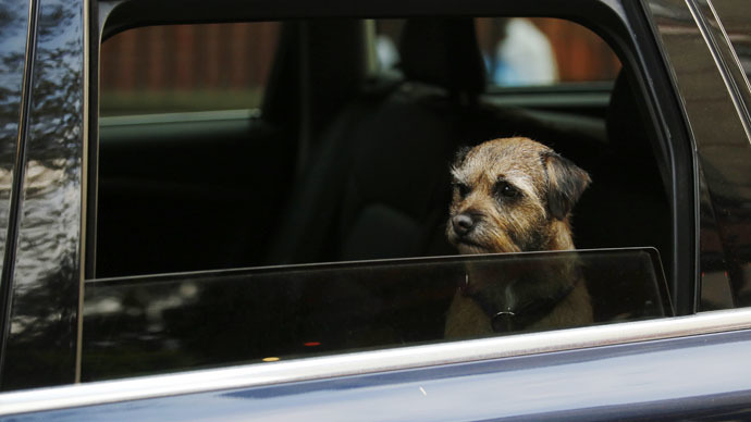 A dog looks out of a car window driving through London March 25, 2014. REUTERS/Luke MacGregor (BRITAIN - Tags: ANIMALS) - RTR3IK8G