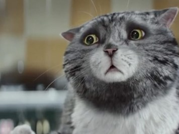 mog-cat-christmas-advert-800x408