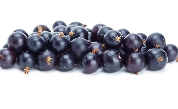 blackcurrants have great health benefits
