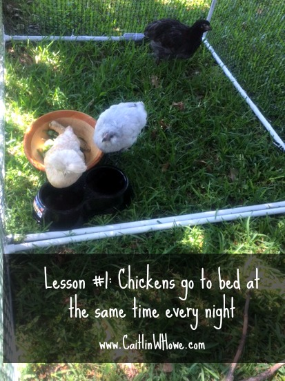 healthy living lesson chickens 1
