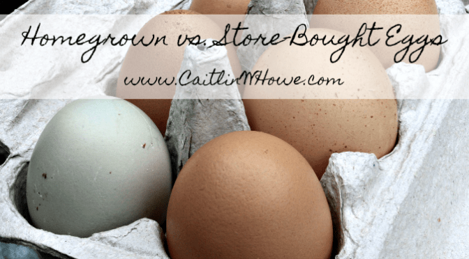 Homegrown vs. Store-Bought Eggs