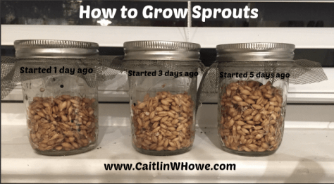 How to grow sprouts 3 jars