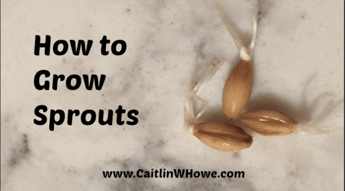 How to Grow Sprouts 3 seeds