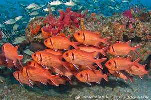 Tropical reef fish in Palm Beach, Florida