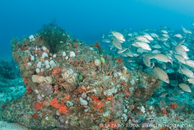 Descending to the reef we were greeted by sights like this