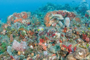 Juno reef's gorgeous reef coverage