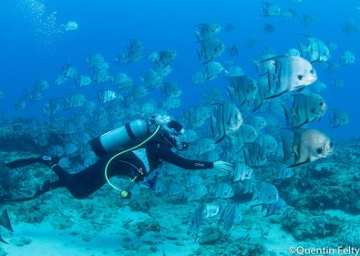 Surrounded by Spadefish