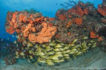 Best scuba diving in Florida is in West Palm Beach