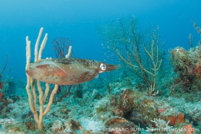 West Palm Beach Dive Charters