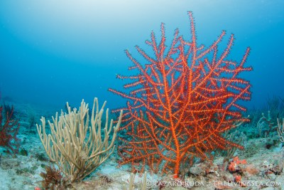 Just a tiny bit of beauty that abounds underwater on the reefs of Palm Beach, Florida.