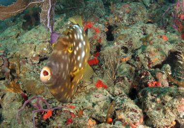 This Orange Filefish wanted to get a closer look.