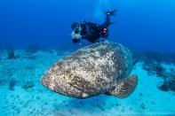 David Ochs and grouper