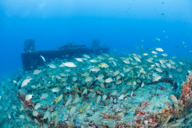 ship wreck with lots of fish