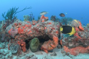 South Double Ledges reef system in Palm Beach