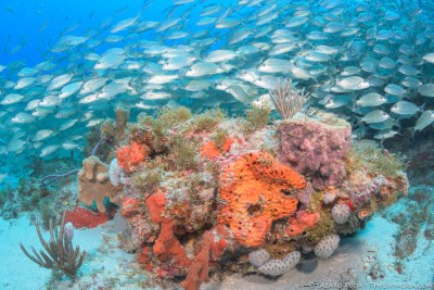 Palm Beach coral and fish