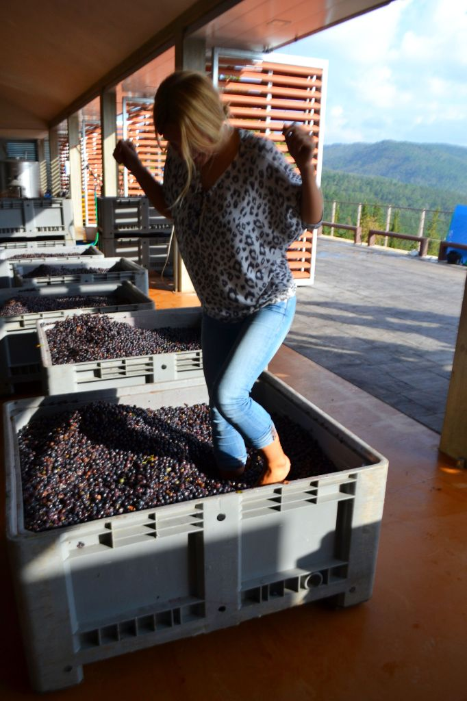 grape stomping, wine making chianti