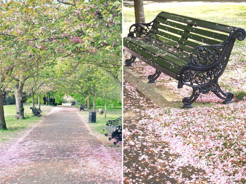 how to get to Cherry Blossom Avenue in Greenwich Park