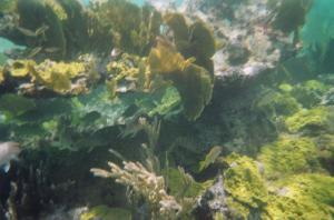 Reef at Casuarina Point (14)