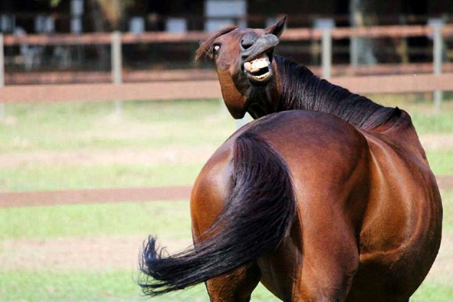 Funny-Pictures-Of-Animals-Smiling