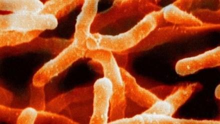 Bacterias encontradas en el suelo, uno de los principales reservorios de microbios en la Tierra. En un solo gramo puede haber un billón de células y hasta 10.000 especies distintas