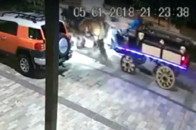 cctv footage with horses on a road and foam