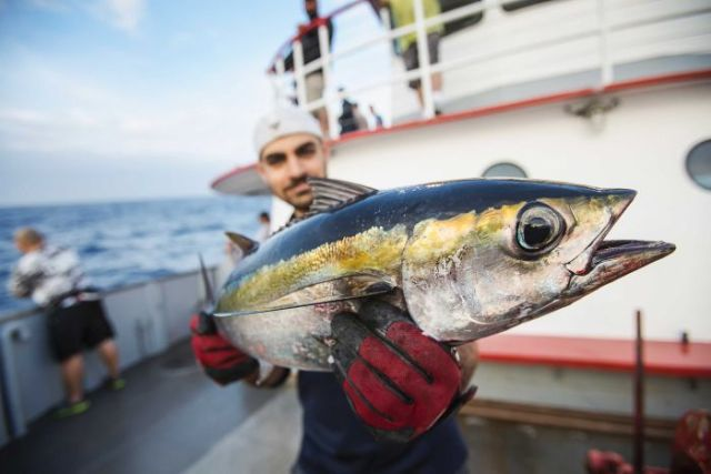 A man holding a yellowfin tuna towards the camera.